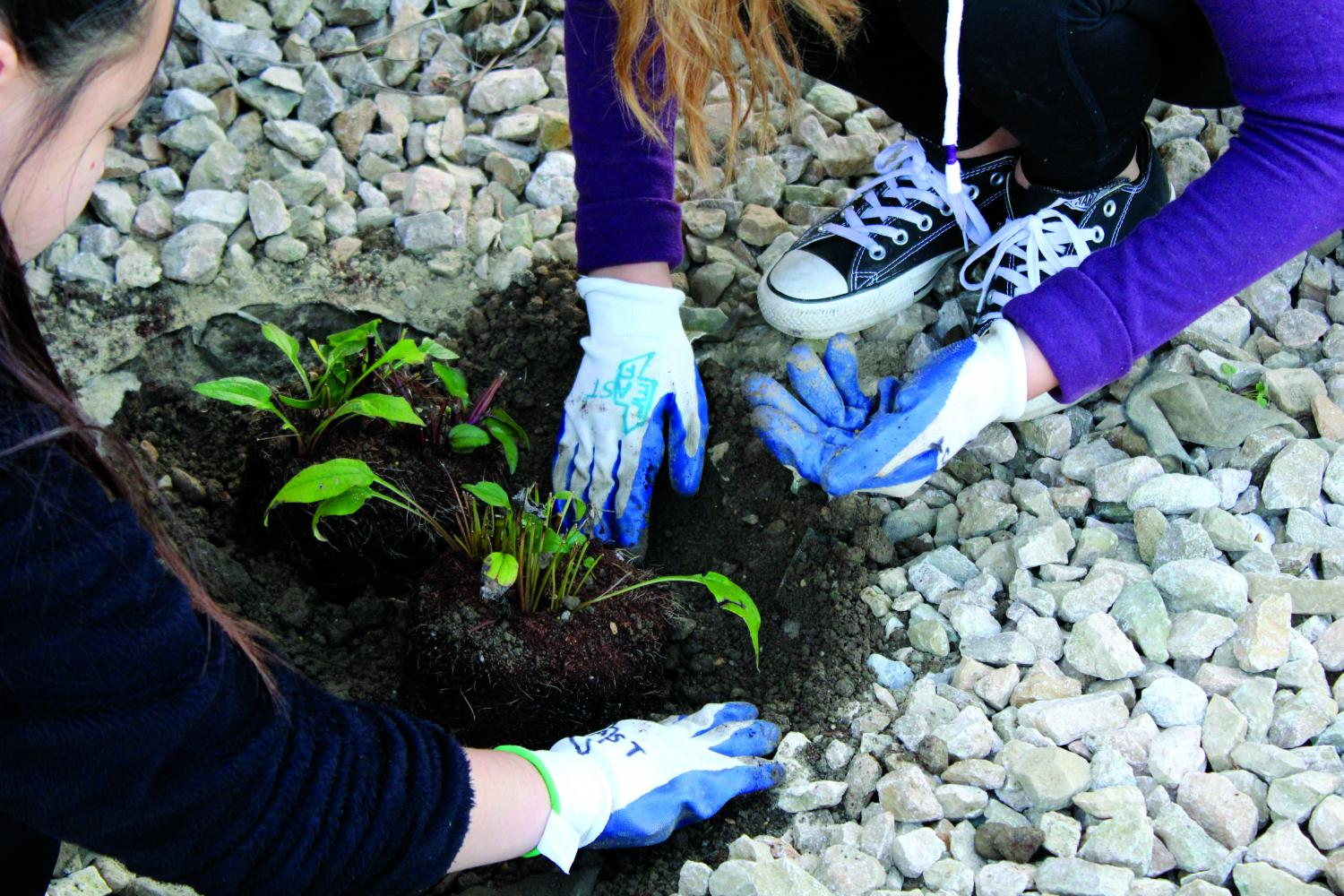 LEAF Club plants trees and flowers 2017 Lakota East Photography by Kara Harris